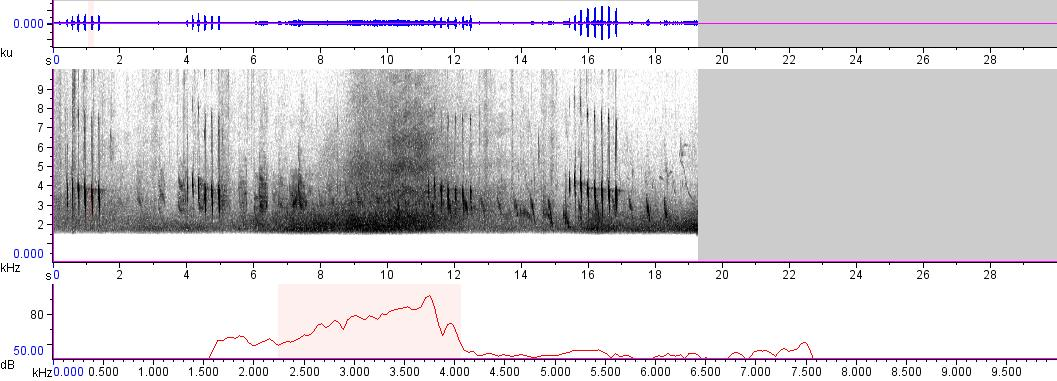 Sonogram of recording #AV 12