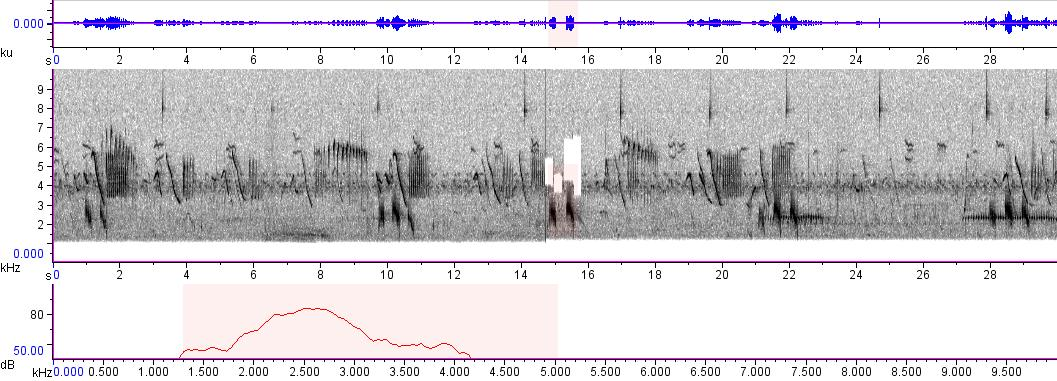 Sonogram of recording #AV 19
