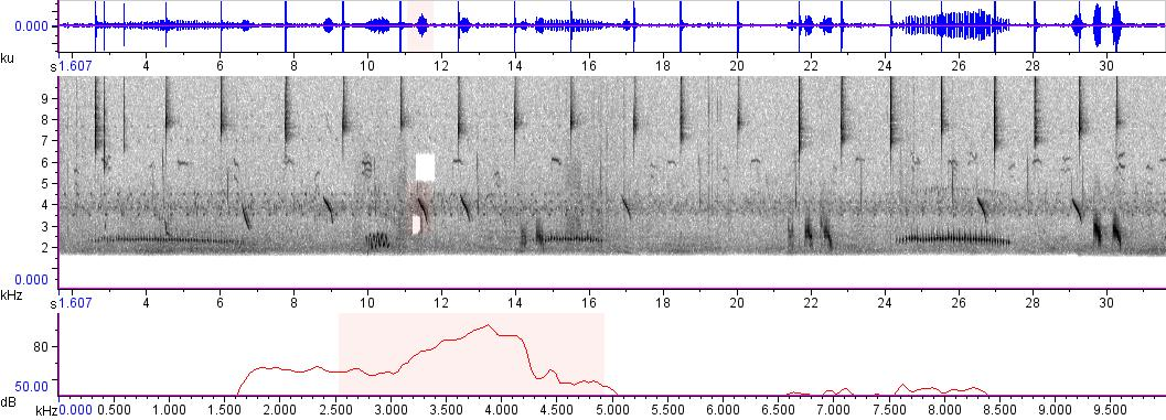 Sonogram of recording #AV 21