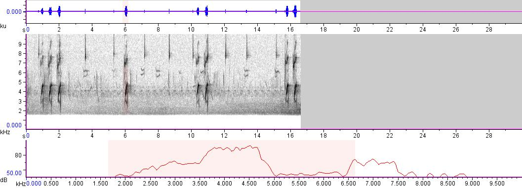 Sonogram of recording #AV 29