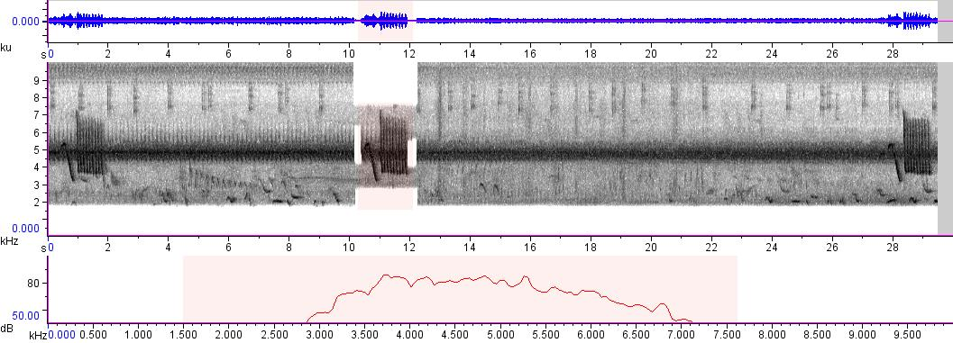 Sonogram of recording #AV 50
