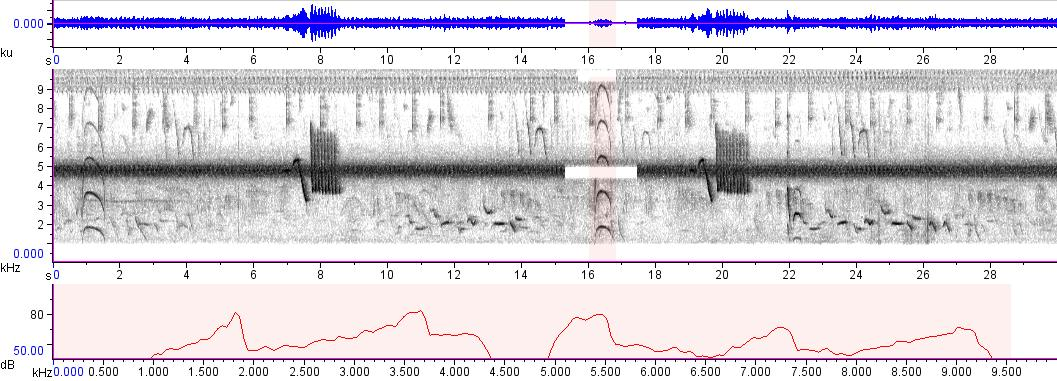 Sonogram of recording #AV 51