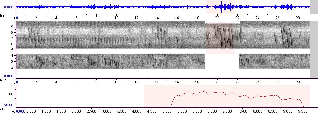 Sonogram of recording #AV 58
