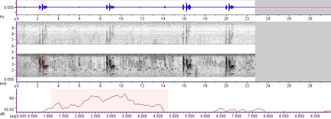 Sonogram of recording #AV 65