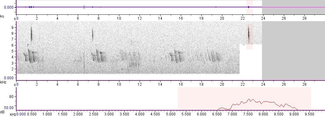 Sonogram of recording #AV 105