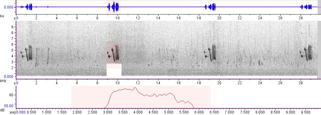 Sonogram of recording #AV 141