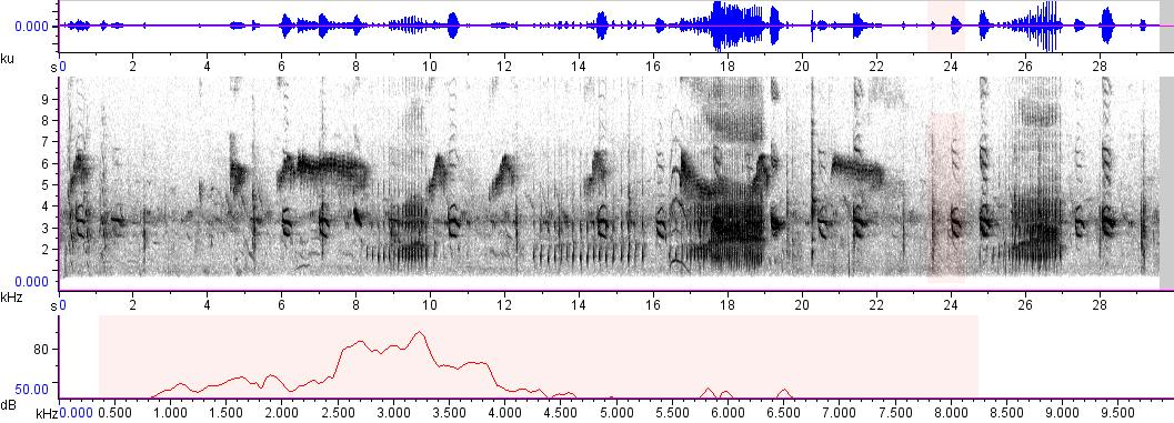 Sonogram of recording #AV 155