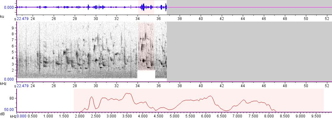 Sonogram of recording #AV 166