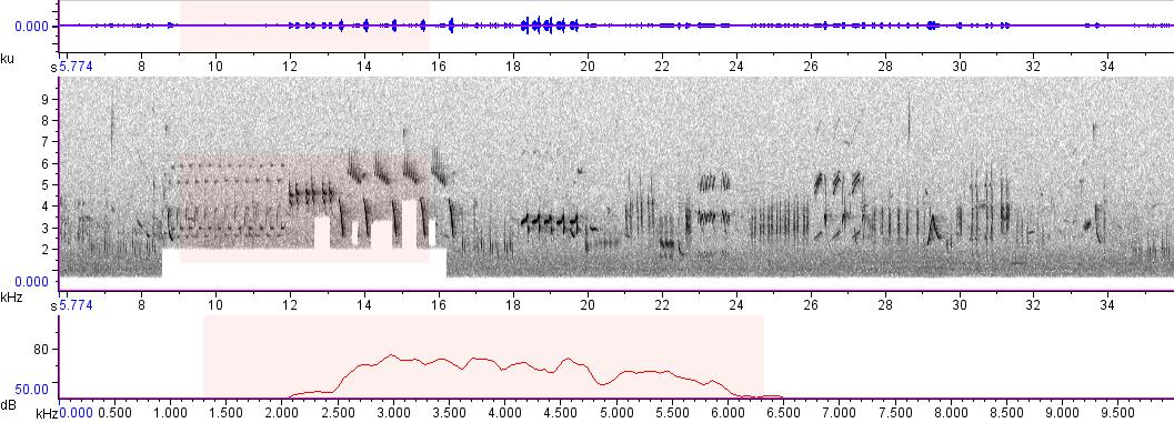 Sonogram of recording #AV 174