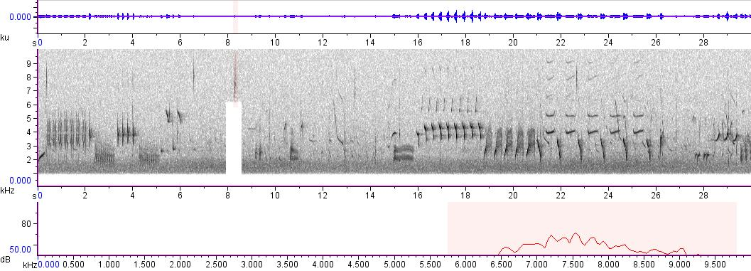 Sonogram of recording #AV 175
