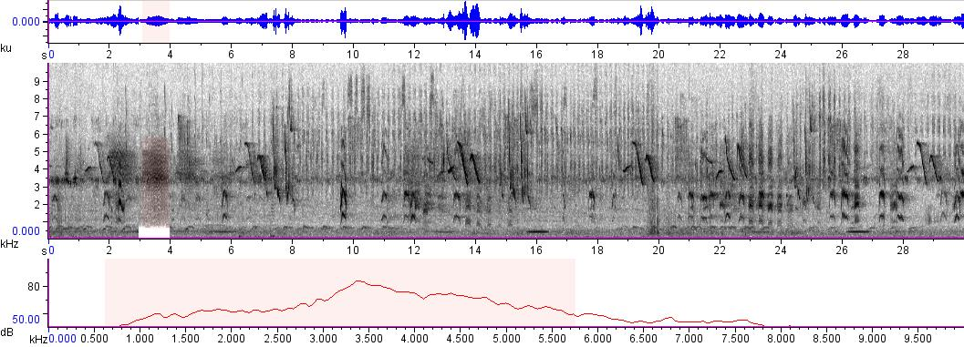 Sonogram of recording #AV 193