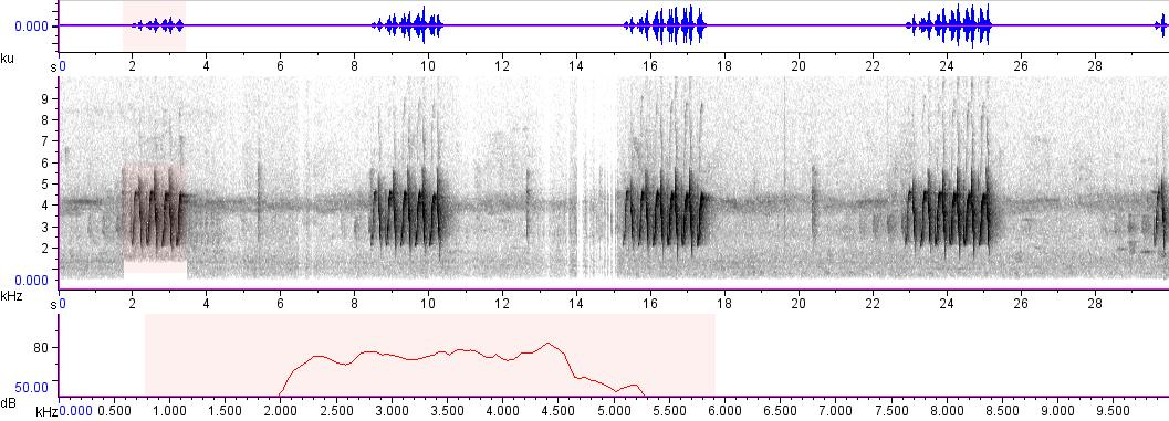 Sonogram of recording #AV 1023