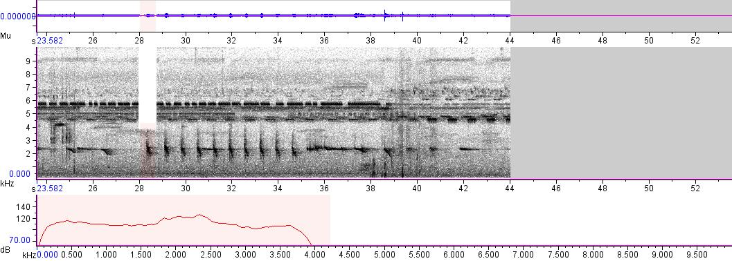 Sonogram of recording #AV 1733
