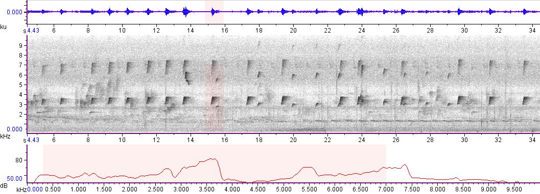 Sonogram of recording #AV 1736