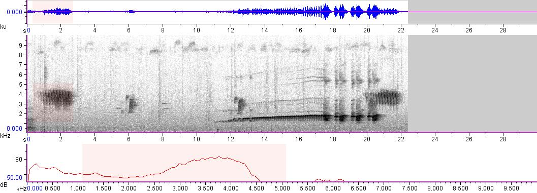 Sonogram of recording #AV 1738