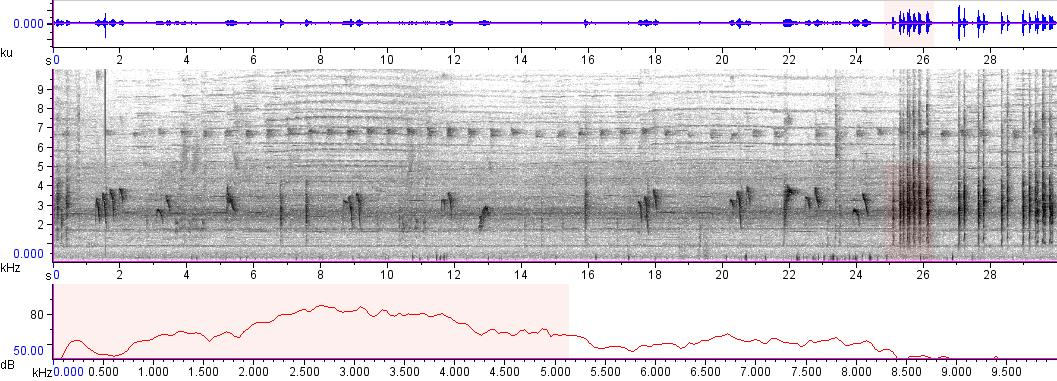Sonogram of recording #AV 1739