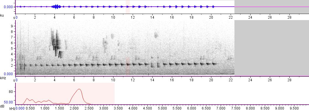 Sonogram of recording #AV 1741