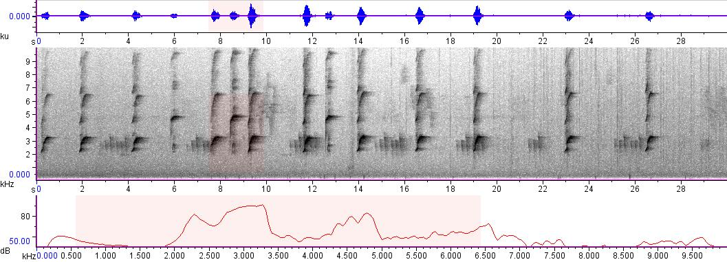 Sonogram of recording #AV 1760