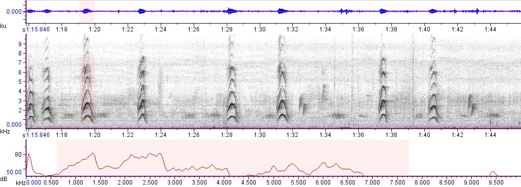Sonogram of recording #AV 1773