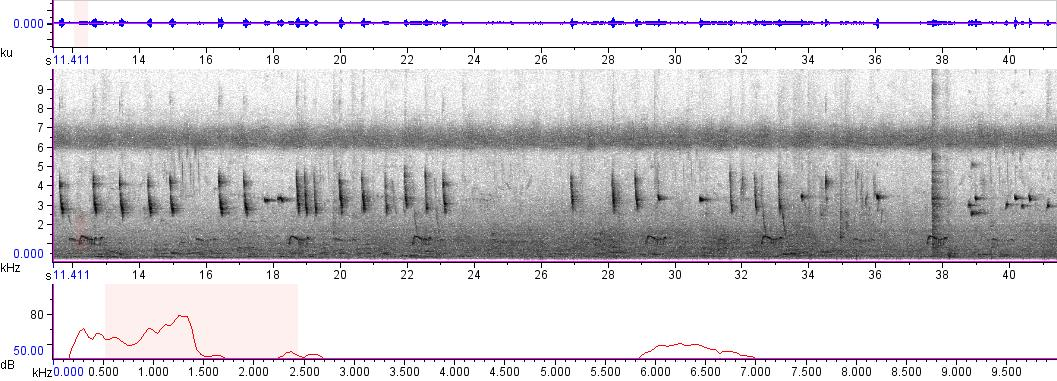 Sonogram of recording #AV 1776