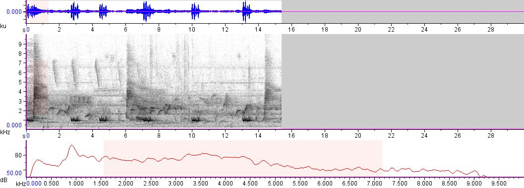 Sonogram of recording #AV 1779