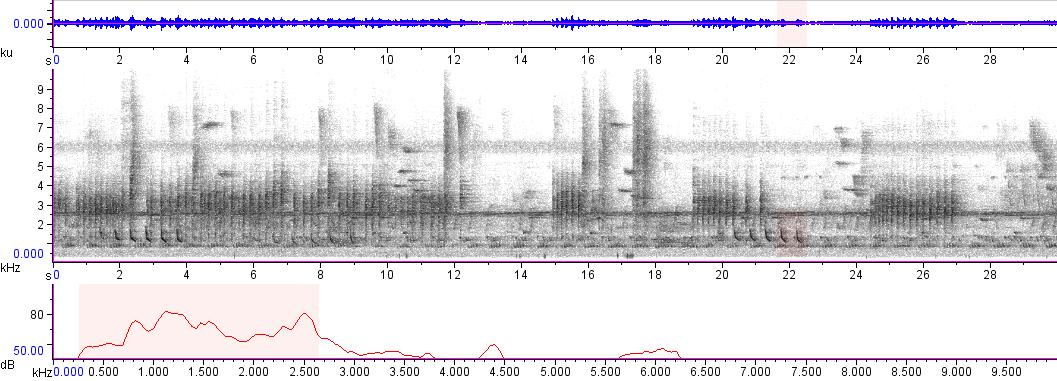 Sonogram of recording #AV 1780