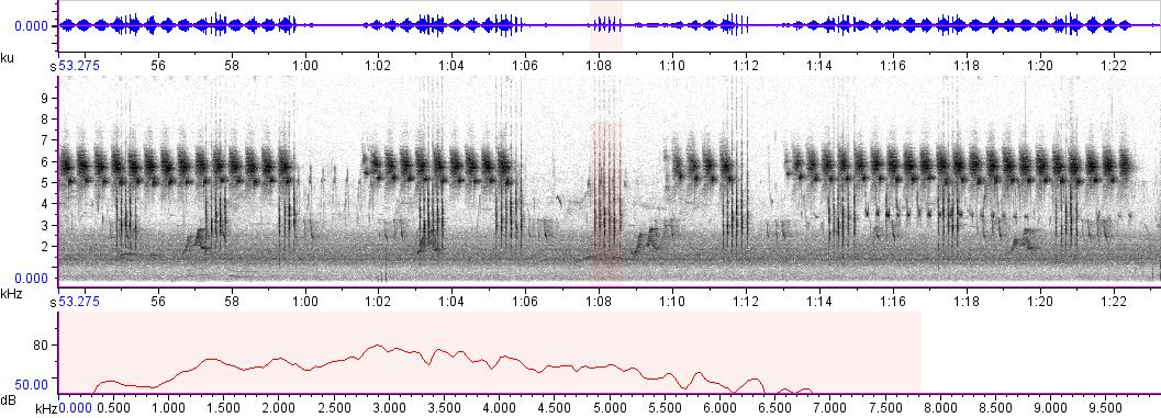 Sonogram of recording #AV 1784