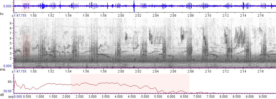 Sonogram of recording #AV 1786