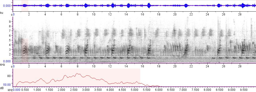 Sonogram of recording #AV 1788