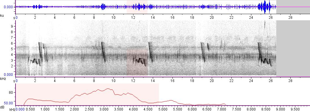 Sonogram of recording #AV 1791