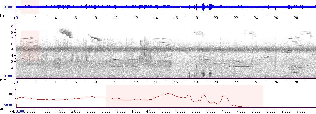 Sonogram of recording #AV 1798
