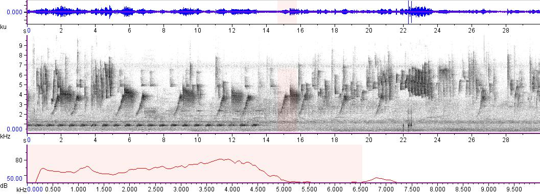 Sonogram of recording #AV 1799