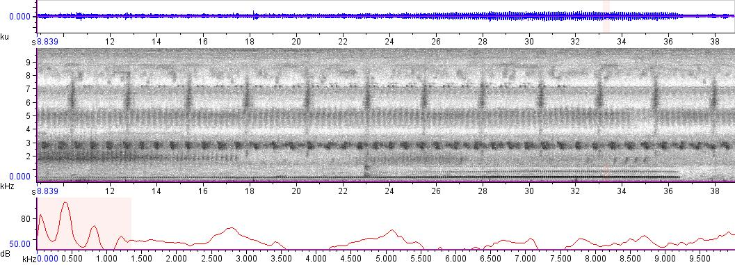 Sonogram of recording #AV 1805