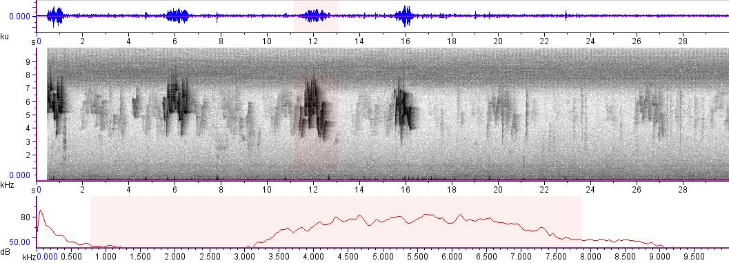 Sonogram of recording #AV 1813