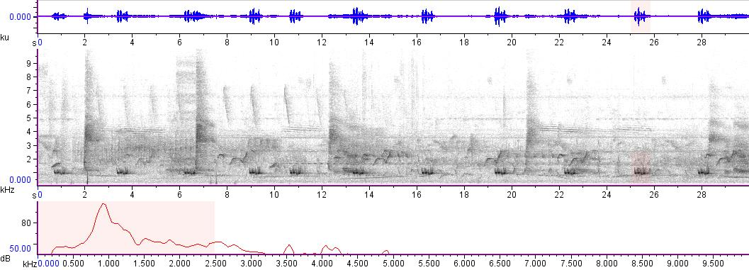 Sonogram of recording #AV 1820