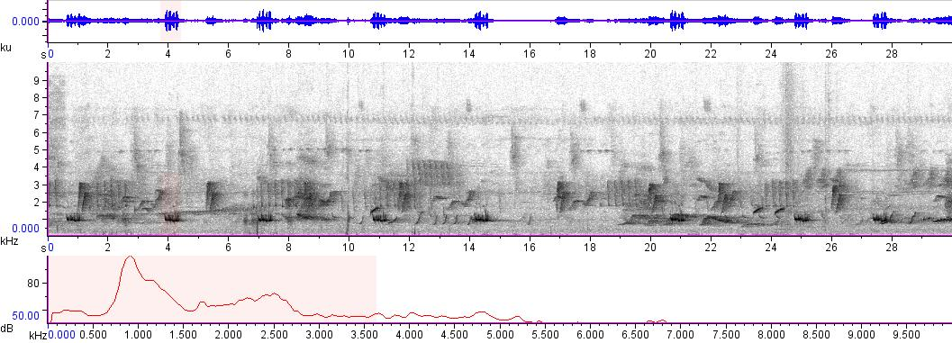 Sonogram of recording #AV 1821