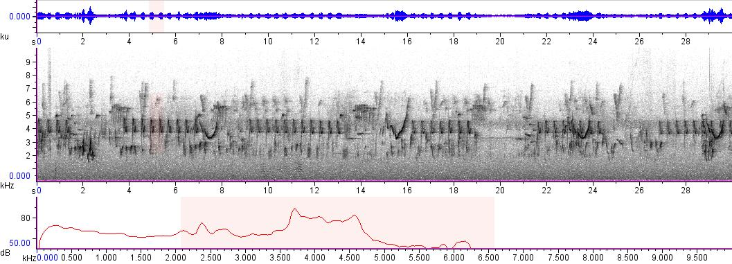 Sonogram of recording #AV 1824