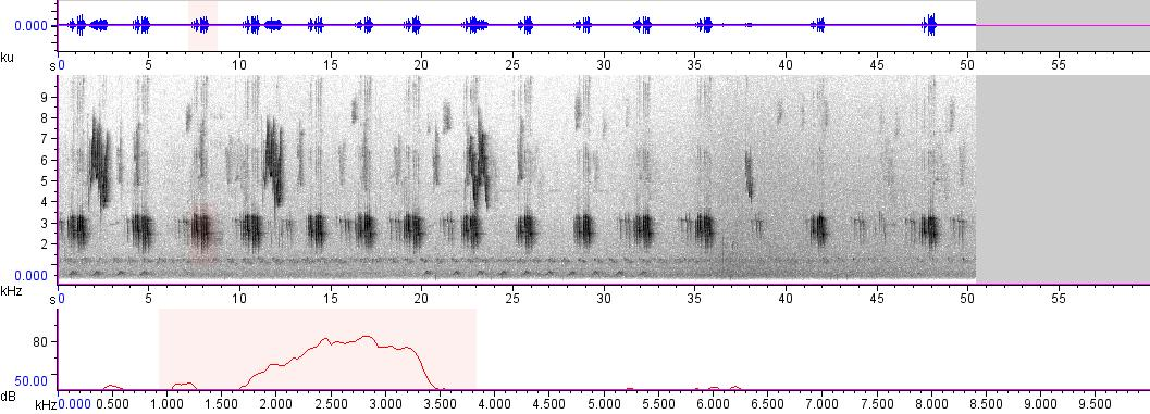 Sonogram of recording #AV 1827