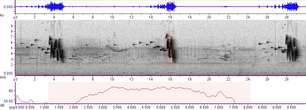 Sonogram of recording #AV 1838