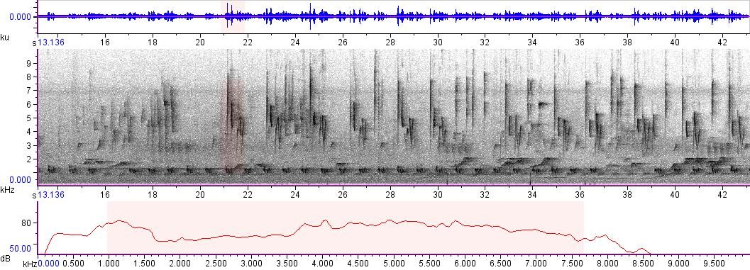 Sonogram of recording #AV 1844