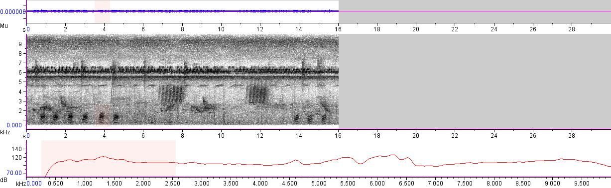 Sonogram of recording #AV 1998