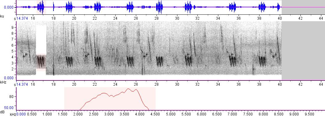 Sonogram of recording #AV 236