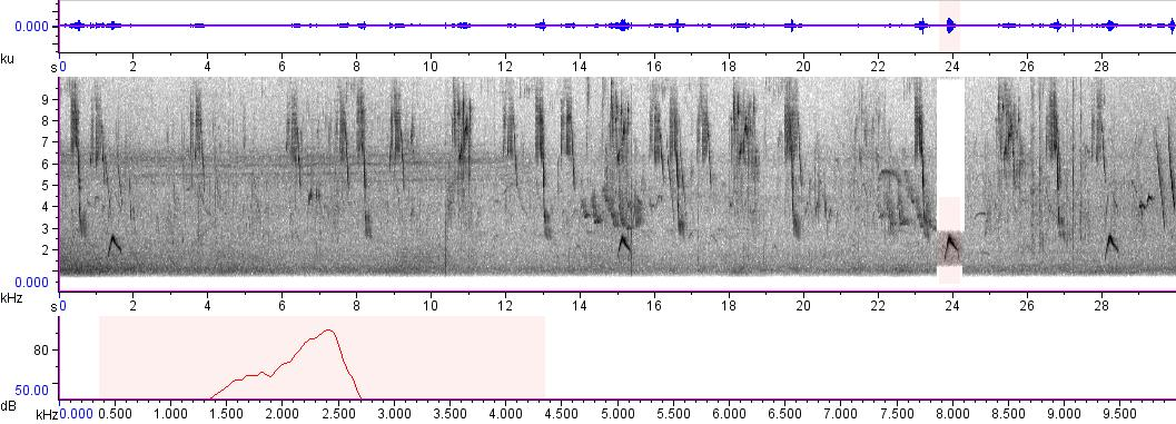 Sonogram of recording #AV 242