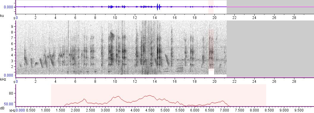 Sonogram of recording #AV 245