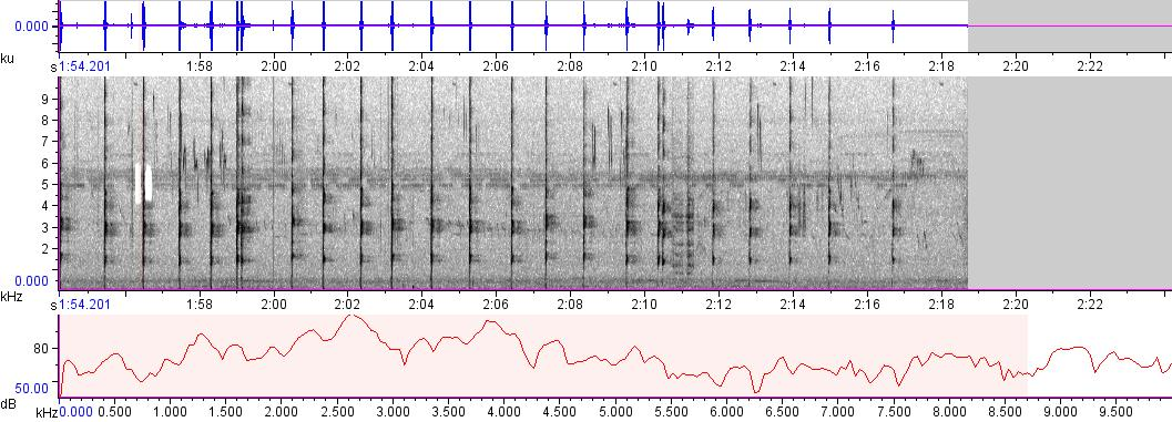 Sonogram of recording #AV 261