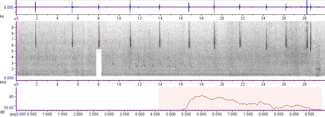 Sonogram of recording #AV 263