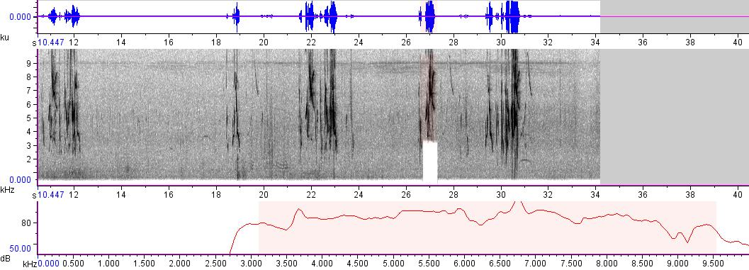 Sonogram of recording #AV 265