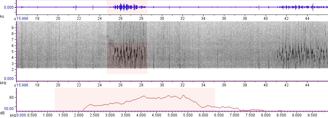 Sonogram of recording #AV 292