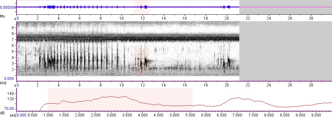 Sonogram of recording #AV 2151