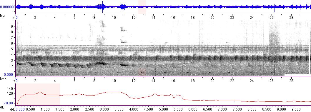 Sonogram of recording #AV 2168